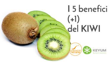 Kiwi alimentazione KeyUm